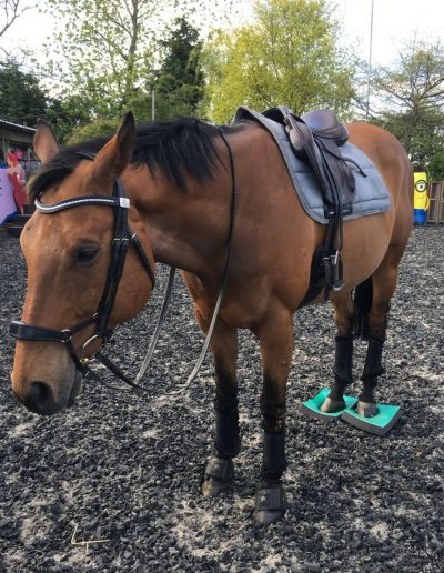 SUREFOOT equine stability programme